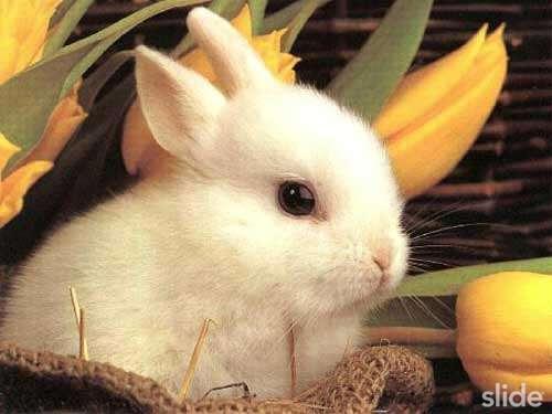 Tài liệu kỹ thuật chăn nuôi thỏ - Phần 6