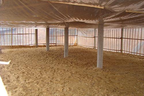 Sử dụng chế phẩm Balasa-N01 làm đệm lót chuồng trong chăn nuôi gà