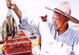 Bạc Liêu: Tích cực thực hiện dự án nuôi tôm theo quy trình VietGAP