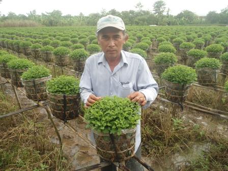 Hồ Minh Thu - Nông dân giỏi trồng cúc mâm xôi