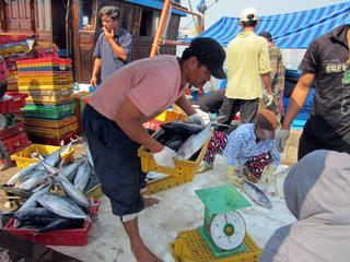 Cần sớm hình thành và phát triển dịch vụ hậu cần nghề cá