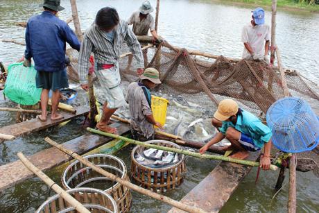 Đồng bằng sông Cửu Long: Hướng đến nền nông nghiệp hiện đại và bền vững