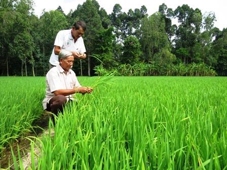 Đồng Tháp: Triển vọng từ Câu lạc bộ sản xuất lúa giống xã Bình Thạnh Trung