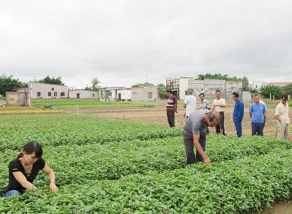 Sử dụng côn trùng trong sản xuất rau sạch