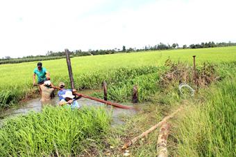 Nước lũ về sớm: Nông dân trồng lúa thấp thỏm lo!