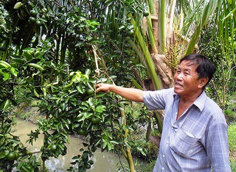 Nông dân sản xuất giỏi, xây dựng nông thôn mới tích cực