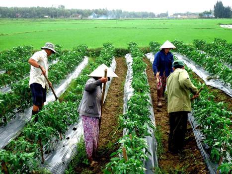 Việt Nam có thể cắt giảm 50% lượng thuốc bảo vệ thực vật