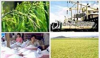 Phát triển thương hiệu gạo Việt Nam