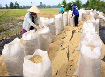 Thông tin sản xuất tiêu thụ gạo một số nước giữa tháng 10/2014