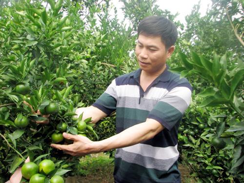 Bắc Giang: Triệu phú nông dân