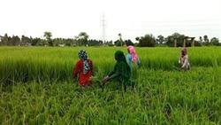 Nông dân Ấn Độ chống chọi với BĐKH nhờ công nghệ