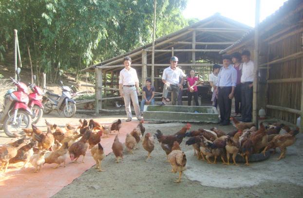 """Hiệu quả từ mô hình """"Chăn nuôi gà thịt trong nông hộ đảm bảo an toàn dịch bệnh"""""""