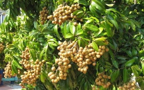 Nhãn Việt Nam chính thức được cấp mã số vào thị trường Mỹ