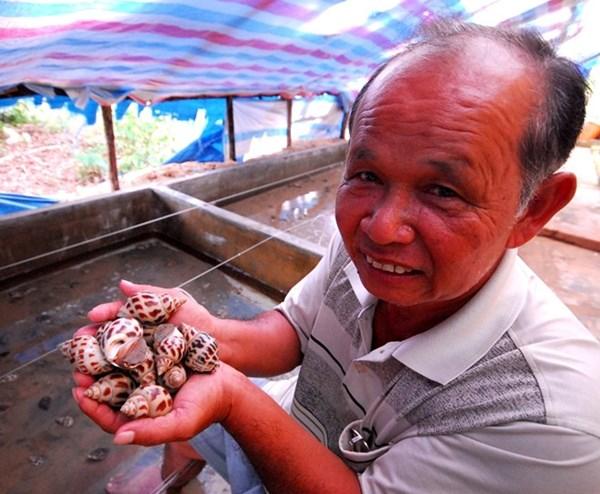 Tỷ phú nuôi ốc hương trên Đảo Ngọc
