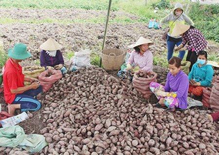 Trong cơ cấu lại ngành nông nghiệp, huyện Bình Tân đã xây dựng được nhiều mô hình hiệu quả.