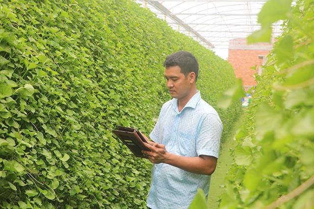 Phần lớn các công đoạn chăm sóc cây rau má đều được anh Võ Thanh Beo thực hiện nhanh gọn thông qua ứng dụng trên thiết bị di động thông minh